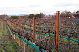 February 2014 Vineyard Journal